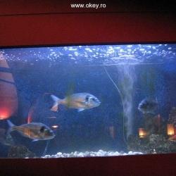 Arsenal: acvariul