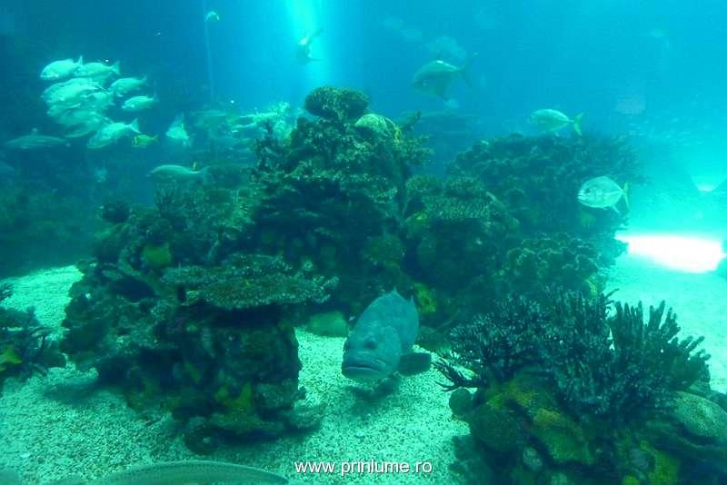 Corali si alge